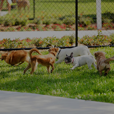 Large Dog Park at Studio City Hills Apartments
